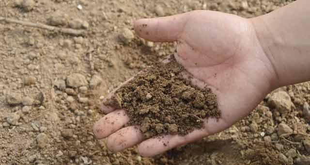difference between starter fertilizer and regular fertilizer