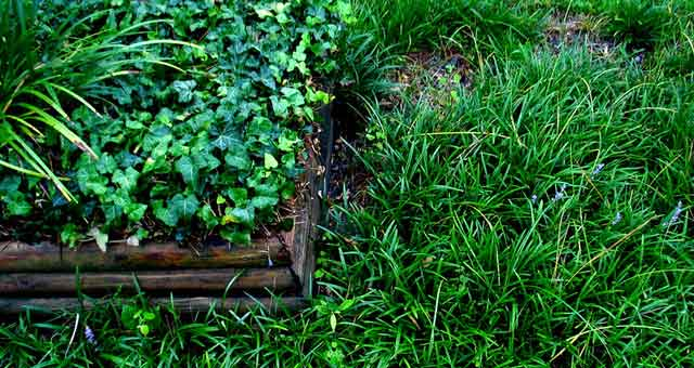 how to maintain bermuda grass lawns