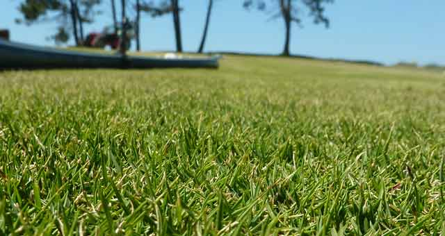 different zoysia grass types