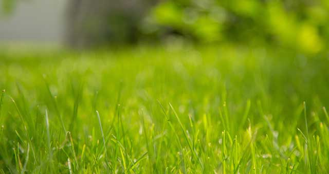 here are the best fertilizers for bermuda grass