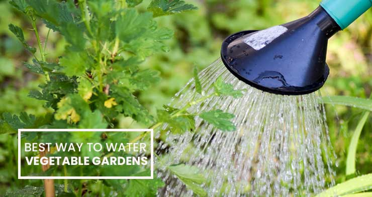 what is the best way to water vegetable gardens